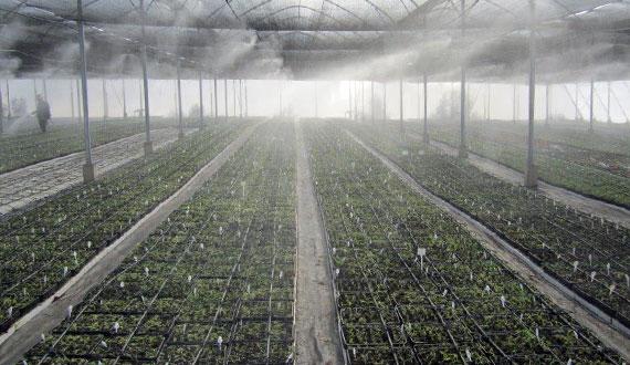 BERNABEIVIVAI_irrigazione_goccia_new
