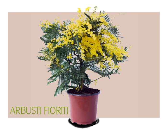 Home bernabei vivai for Arbusti fioriti perenni